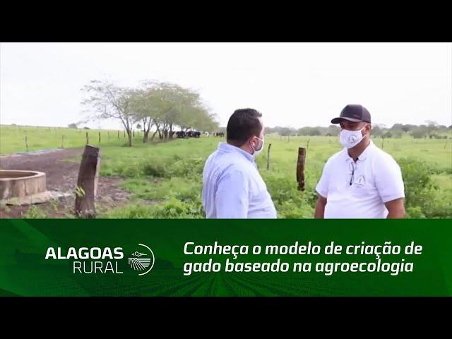 Conheça o modelo de criação de gado baseado na agroecologia