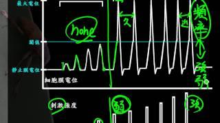 9 2 9動作電位的全有全無律三捷0