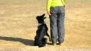 2011.2.12服従訓練練習会.