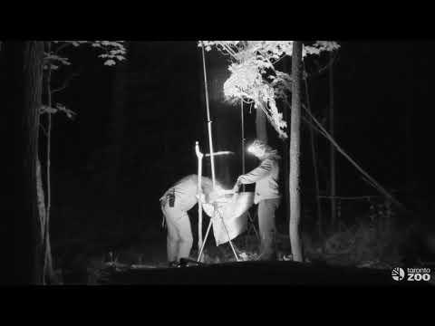 Toronto Zoo Bat Diaries - Bat Week Special