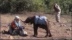 REAeV in Kenias Elefantenkindergarten
