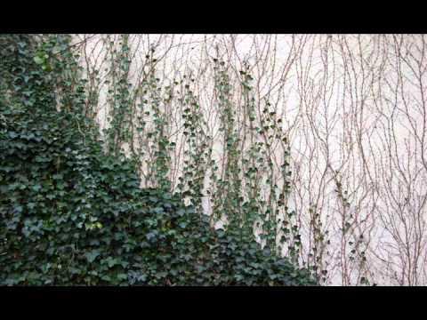 Bones & Dylan Ross- The Ivy