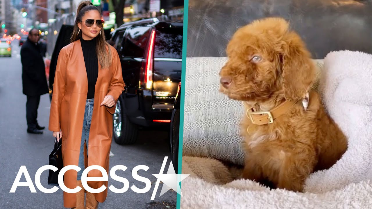 Chrissy Teigen and John Legend's Daughter Luna Can't Get Enough Of Their Adorable New Puppy