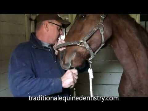 Traditional Equine Dentistry