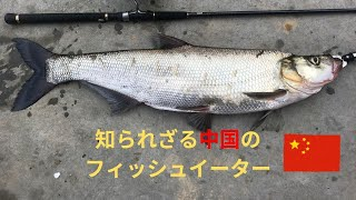 【怪魚釣り】中国の湖で巨大な肉食魚が釣れた【海外釣行】【スカイゲイザー】Ferocious fish eater