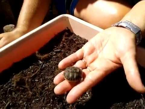tartarughe appena nate youtube