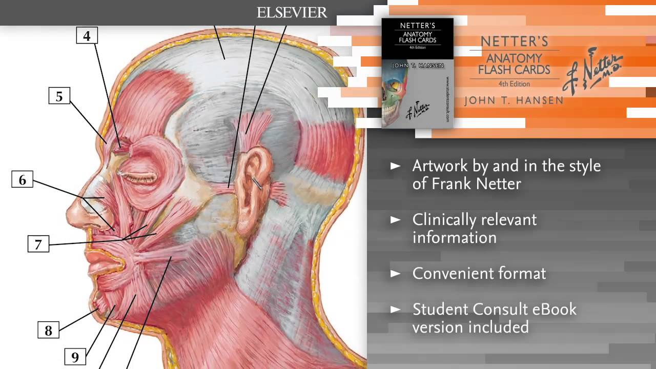 Netters Anatomy Flash Cards 4th Edition Youtube