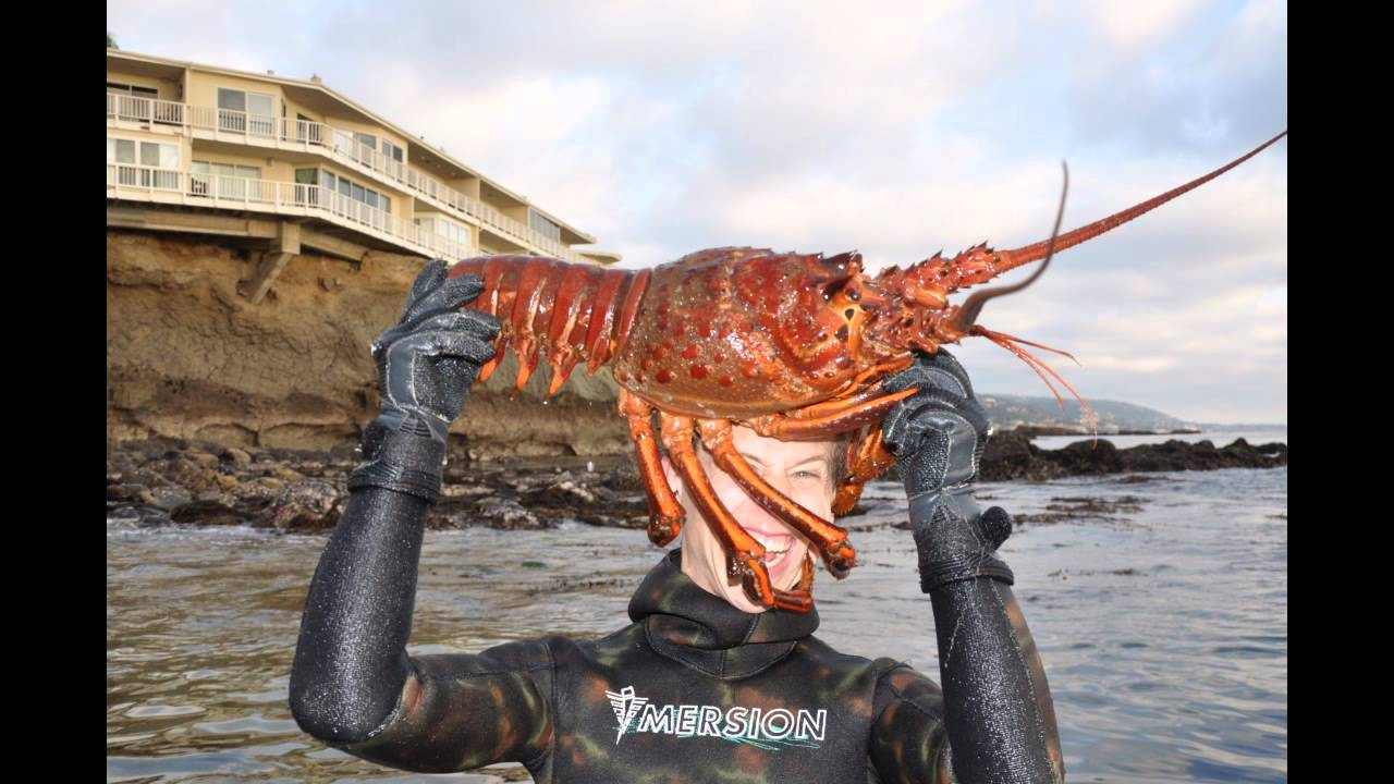 My Giant 12lbs Lobster - YouTube