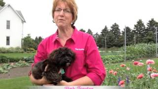 Pink Tractor Presents: The keys to a successful farm family business