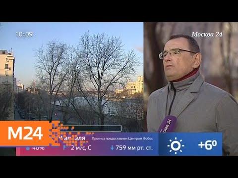 Погода в выходные в Москве будет благоприятной для пикников - Москва 24