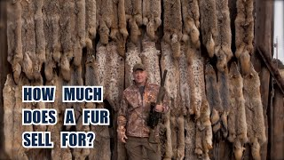 How Much is a Coyote Fur Worth? Behind the Scenes at a Fur Auction