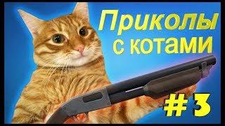 Лучшие и самые смешные приколы с котами и кошками Смешные животные Отборные приколы 2018 Funny Cats.