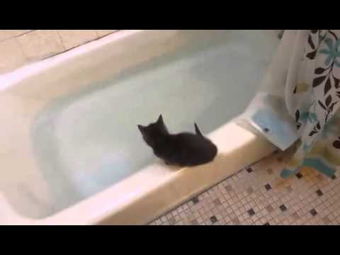 Funny Kitten jumps in bath tub