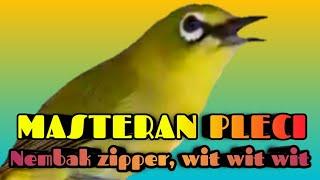 Download Mp3 Masteran Pleci Nembak Zipper Dan Wit Wit Wit.