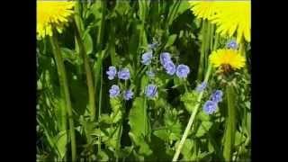 «Сорняки» из цикла «Российский гербарий»