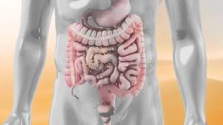 Mega dosis de Vitamina C para fortalecer el Sistema Inmune