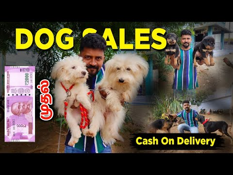 DOG FOR SALES/ALL PUPPYS SALES/CASH ON DELIVERY/KENNELS IN TAMILNADU/NANGA ROMBA BUSY