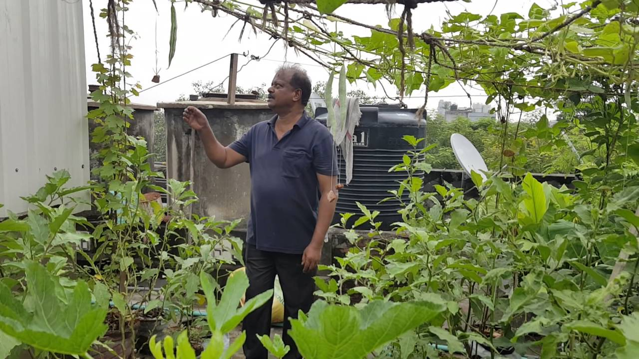 Terrace Kitchen Garden Mattupaavu Krishi Terrace Kitchen Garden Youtube