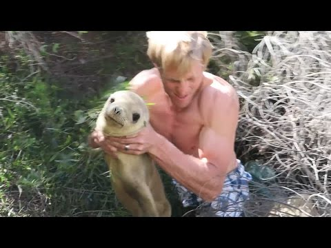 Emotional Rescue of Stranded Seal!