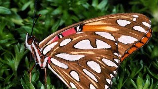 Moths An Butterflies SlideShow With Relaxing Classical Music