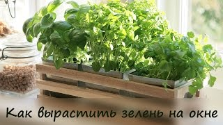 видео Выращиваем зелень на балконе: какую, как и когда.