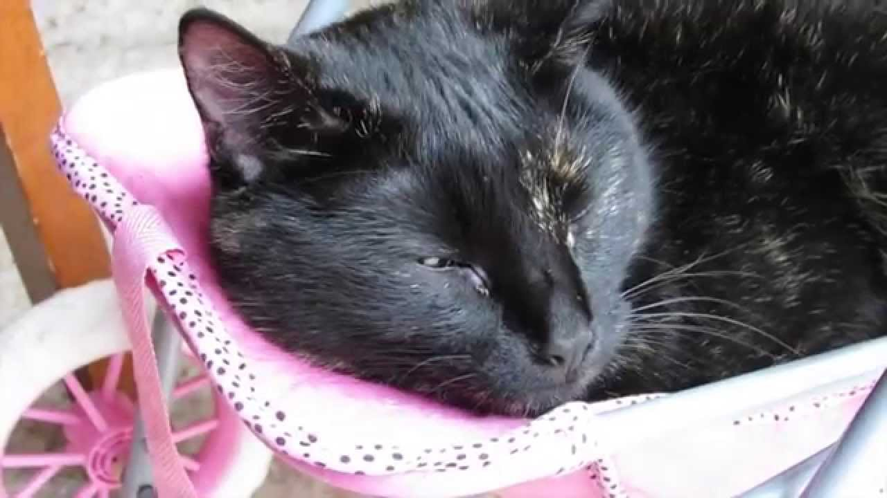 CUTE kitty cat loves a baby doll stroller ride