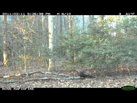 Best of Game Cameras Large m4v iPad, iPhone 4 & Apple TV
