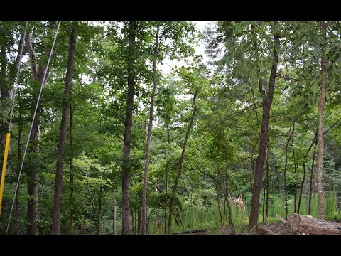 lots-and-land-for-sale---lt402-crown-court,-ellijay,-ga-30540
