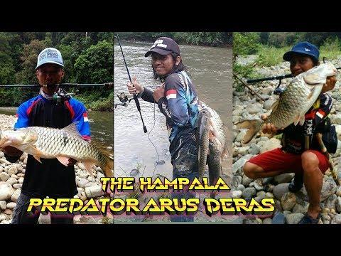 JEJAK PETUALANG | Mencari Ikan Predator Arus Deras Jilid 2 | Wehea Forest Borneo | Angler Blusukan