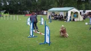 Famy's final agility competition Thumbnail