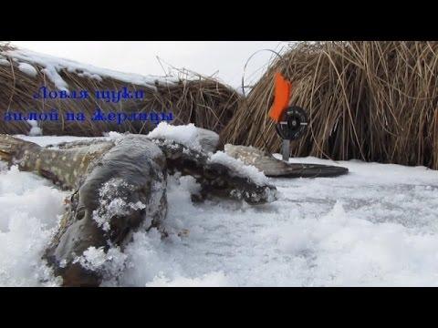 Ловля щуки зимой на жерлицы Часть 2відео рибалка зима 2015  Pike Fishing Winte