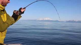 Halibut Fishing Cook Inlet Alaska
