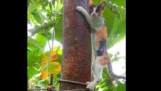 Cute kitten climbing down a tall tree Cute kitten climbing up #short #shortvideo #shortvideos #cats