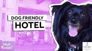 Dog-Friendly Hotel Sydney | What's Possible?