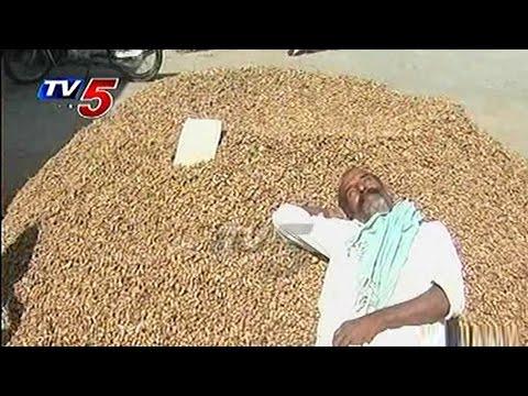 Low Price Hurts Peanut Farmers in Nalgonda | Annapurna | Telugu News | TV5 News