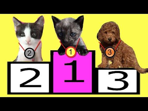 Competencias para mis gatos graciosos - Los mejores videos de gatitos chistosos 11