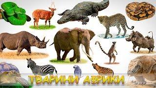 Картинки і звуки тварин Африки. Тварини Африки для дітей. Пізнавальне відео для дітей.