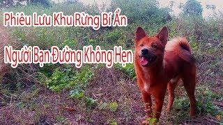 Phiêu Lưu Khu Rừng Bí Ẩn -  Phim Thiếu Nhi | VKV
