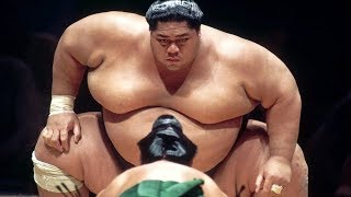 БОЙЦЫ СУМО. Как они живут и тренируются / Самый большой сумоист в истории.