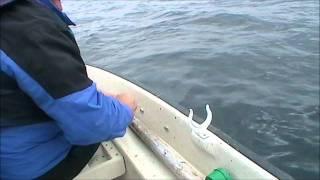 Пикша -  Haddock (Kabelvåg,  Norway - Кабелваг, Норвегия, 2011)