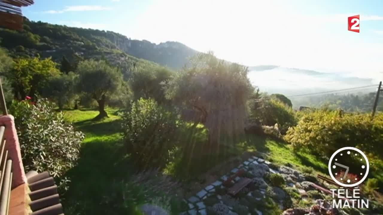 jardin-un olivier dans son jardin - youtube