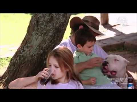 Dogs 101 - Dogo Argentino (Long Version)