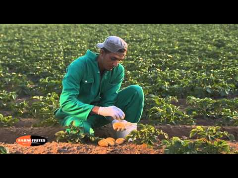 Farm Frites Egypt - Corporate Video