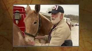 America's Heartland: Tennessee Mule Days