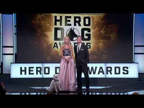 2017 American Humane Hero Dog Awards® Teaser from YouTube · Duration:  31 seconds