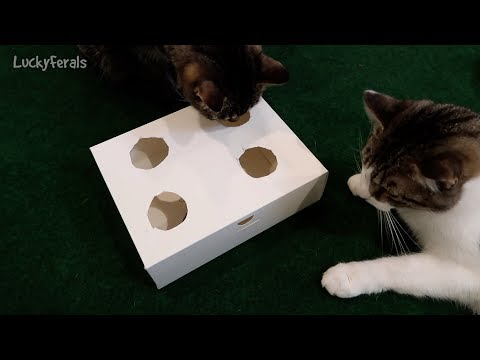 DIY Interactive Cat Toy Puzzle - Stella Is So Smart
