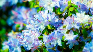 Relaxing Music, Sleep Music Meditation, Non-Stop Beautiful instrumental piano Music
