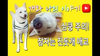 안녕하세요~!! ^^ 이번영상은 해병이의 재밌는 포즈를 영상으로 담은 내...