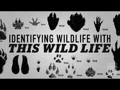 Identifying wildlife with THIS WILD LIFE