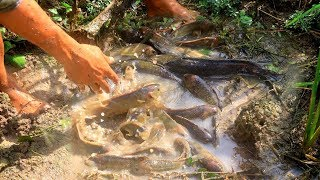 Amazing Fishing TOP 5 Catching Catfish in Dry Season Find Catfish in secre Hole Smart Mans